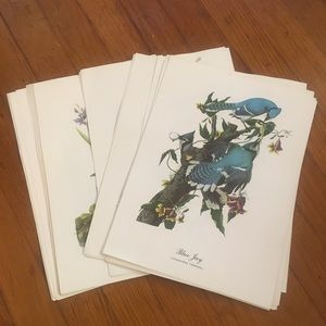 Vintage Birds Book Print Pages Bundle of 39